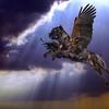 cane corso angel